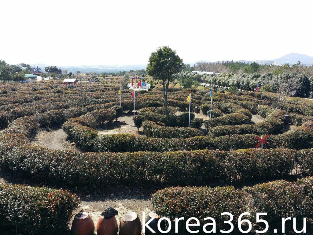 Южная Корея Чеджудо зеленый чай чайная плантация