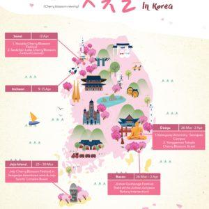 Период цветения вишни
