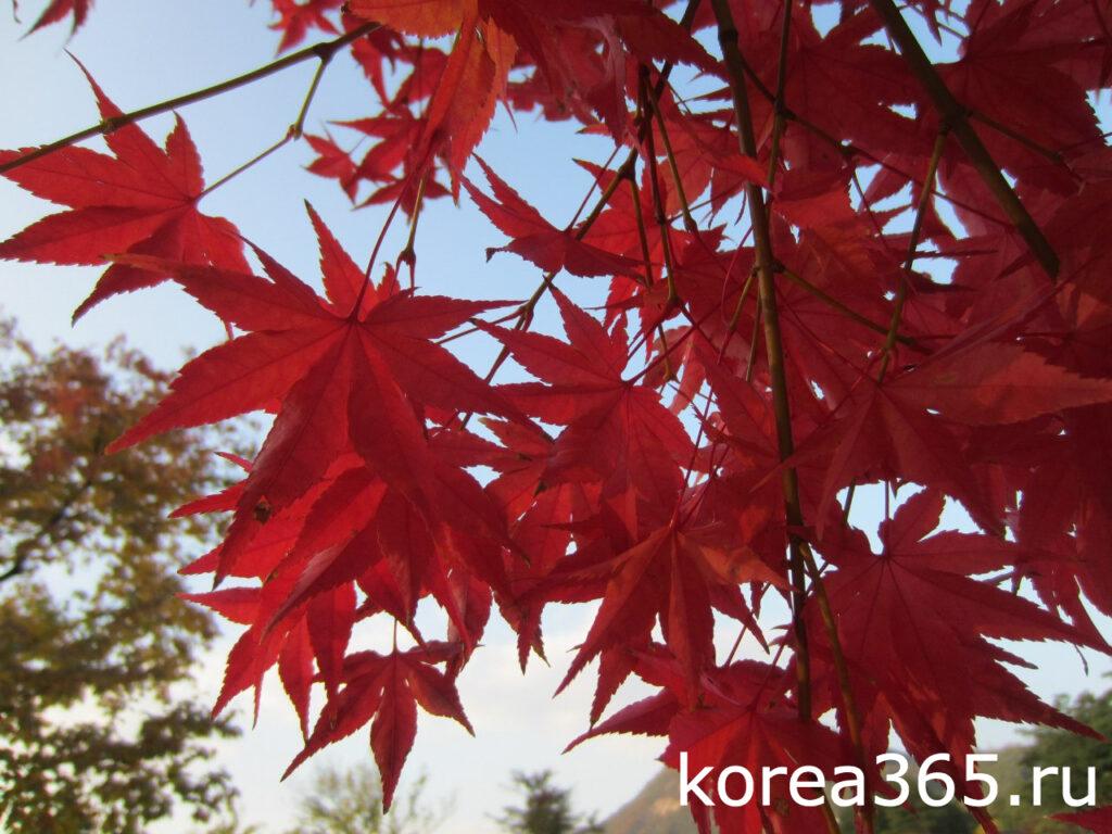 Южная Корея Сеул Кёнбоккун