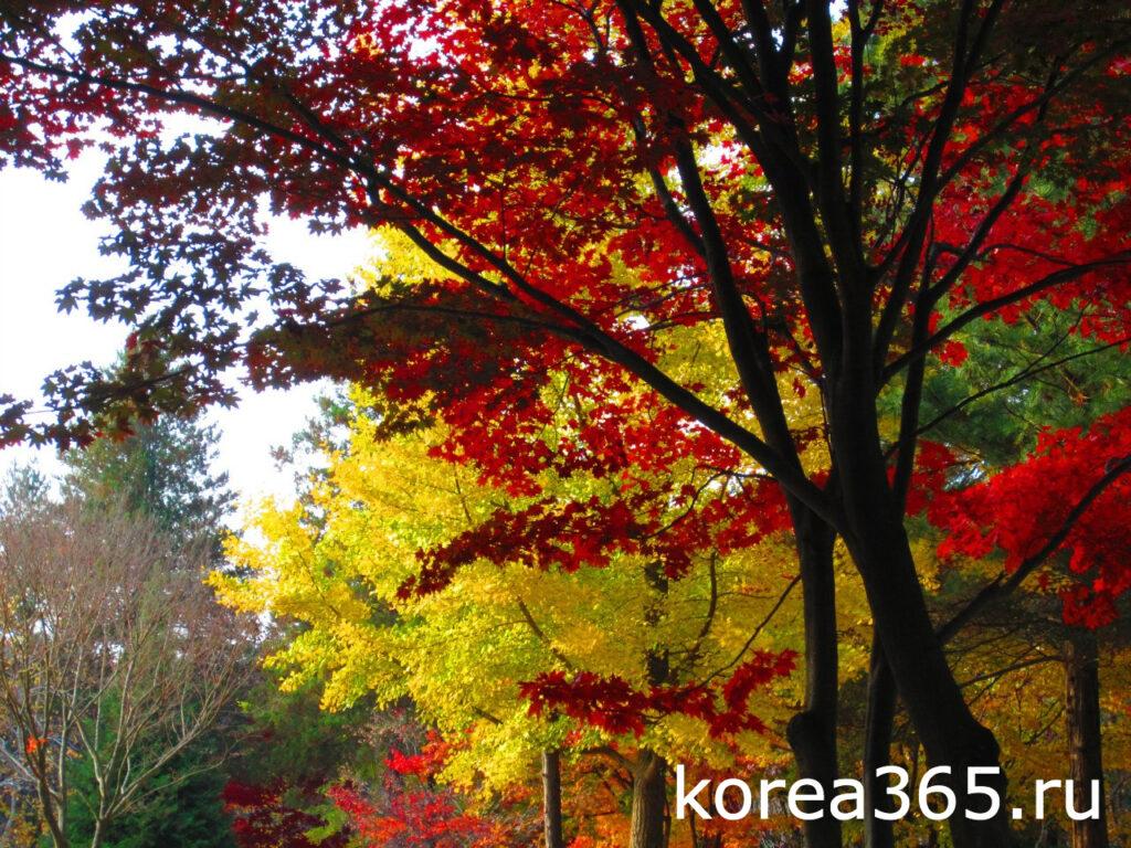 Южная Корея Остров Нами