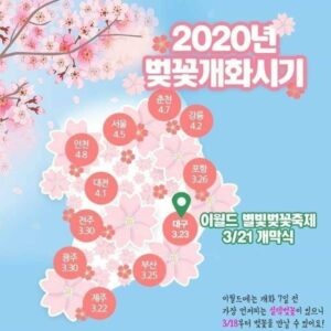 Цветение вишни в 2020 году